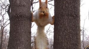 Ninja squirrel dares you to go for his nutz