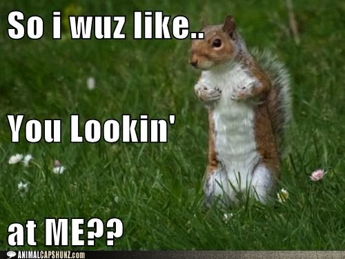 squirrel pics with captions | 96b3a_funny-animal-captions-no-one-messes-with-this-squirrel...