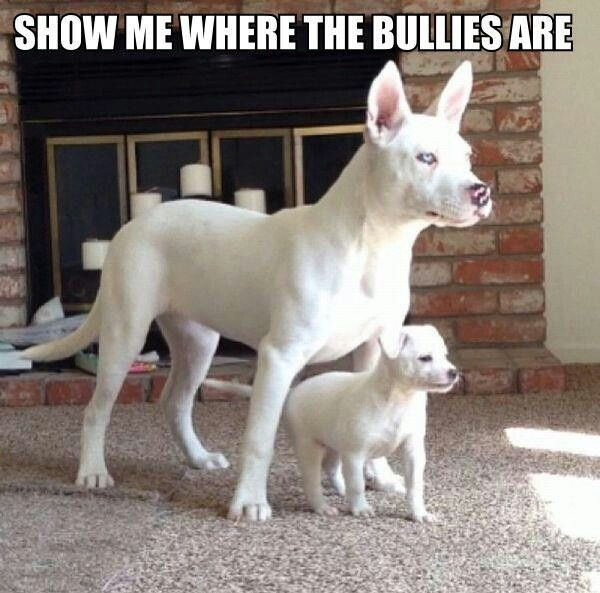 Funny Dogs with Captions   Description from Funny Dog Pictures With Captions wallpaper :