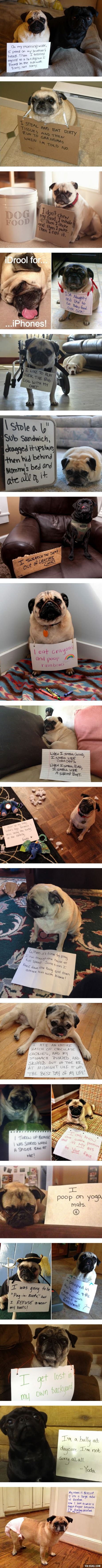 """Pug Some of these are The """"I only know one position"""" thing must be…"""