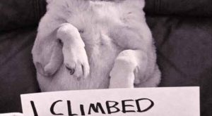 35 Of The Most Hilarious Pet Confessions – BlazePress