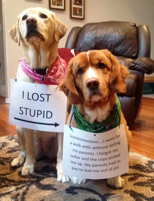 """""""I LOST STUPID -> Soooo…I went for a walk without telling my parents. I…"""