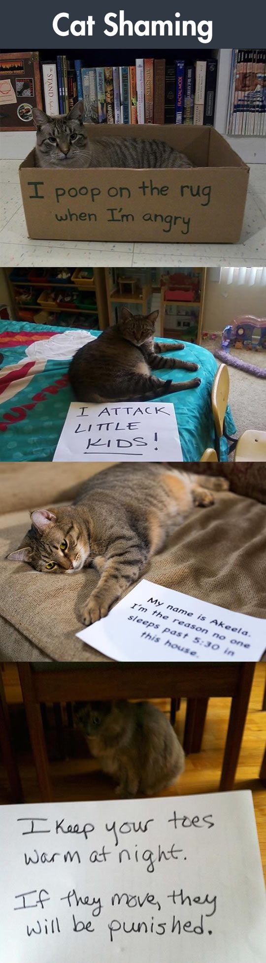 Cat Shaming: Some Of Them Look So Proud