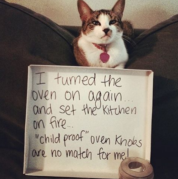 """""""I turned the oven on again and set the kitchen on 'child proof' oven…..."""