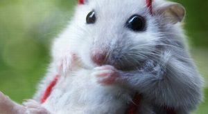 Why do people find mice ugly? Most of the time they're super cute like…