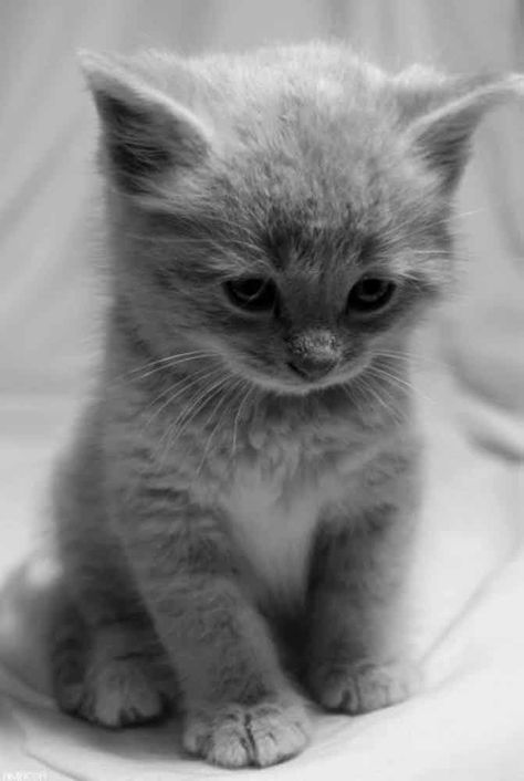 """Time for a big awwwww! #kittens explore Pinterest""""> #kittens #kitty explore Pinteres..."""