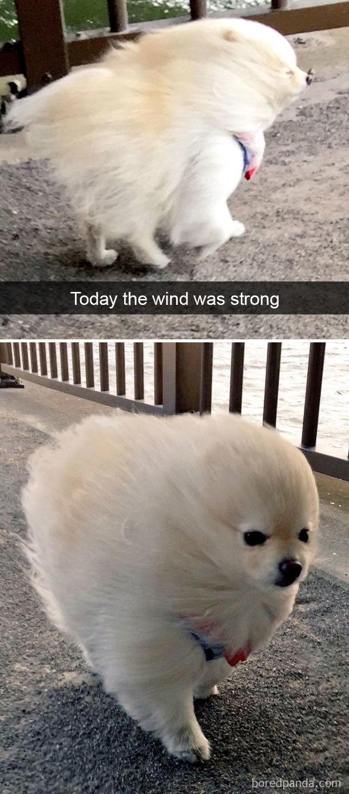 30+ Hilarious Dog Snapchats That Are Impawsible Not To Laugh At (Part 4) #funnydogpictures...
