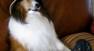 Dog Bios That Will Hilariously Remind You Of Somebody You Know #funny explore Pinterest&#8...