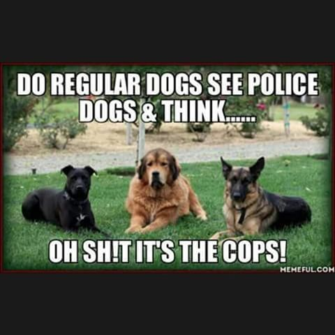 "Image result for police dog memes #policememes explore Pinterest""> #policememes"