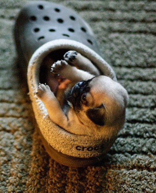Cute Pictures Of Tiny Puppies (23)