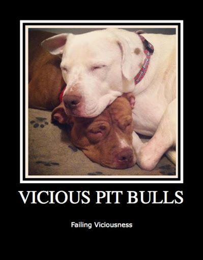 "Vicious Pit Viciousness #pitbull explore Pinterest""> #pitbull"