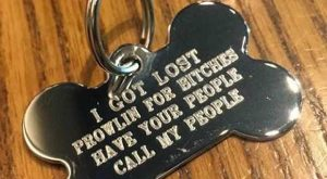 "Dog Tags ~ funny snapchat humor #funnydoghilarious explore Pinterest""> #funnydogh..."