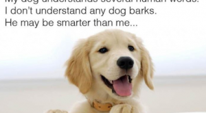 """30 Funny Pictures Of The Day #funnydoglaughter explore Pinterest""""> #funnydoglaugh..."""