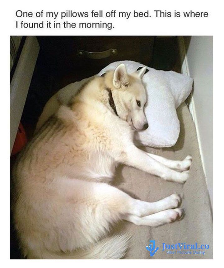 Funny Dog Memes That Will Cure Your Bad Day – 32 #funnydoghumor explore Pinterest&#8...