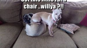 Funny Animal Pictures Of The Day – 15 Images #funnydogshaming explore Pinterest&#822...