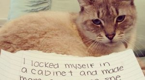 Cat Shaming | Shame on you, furry part:Cat Shaming (25 pics)