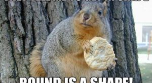 Round is a shape funny memes meme lol cute. humor funny animals squirrell funny…