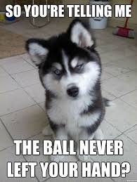 funny animal captions – Google Search