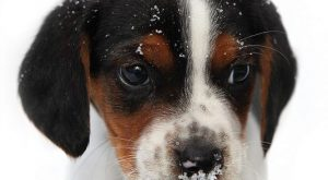 "First winter – so cute! #puppies search Pinterest""> #puppies #dogs search Pint..."