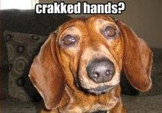 Funny Dachshund Pictures with Captions | Funny Dachshund Pictures with Captions