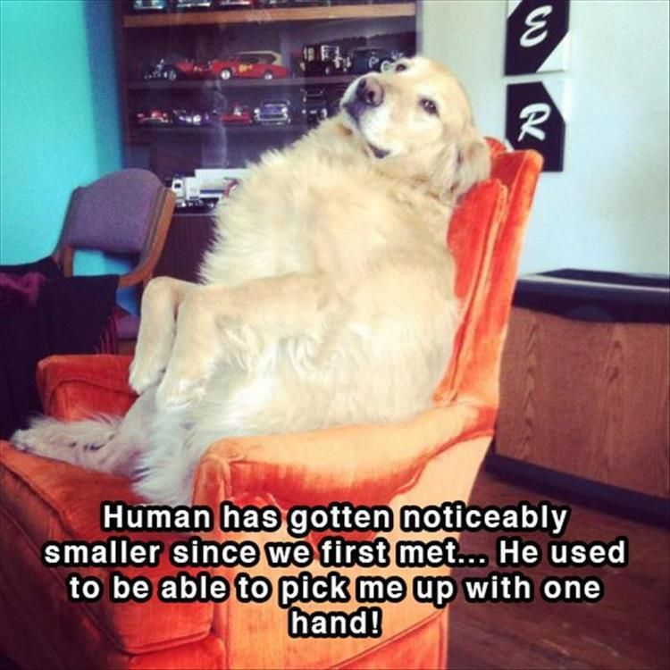 16 Funny Doggy Shower Thoughts