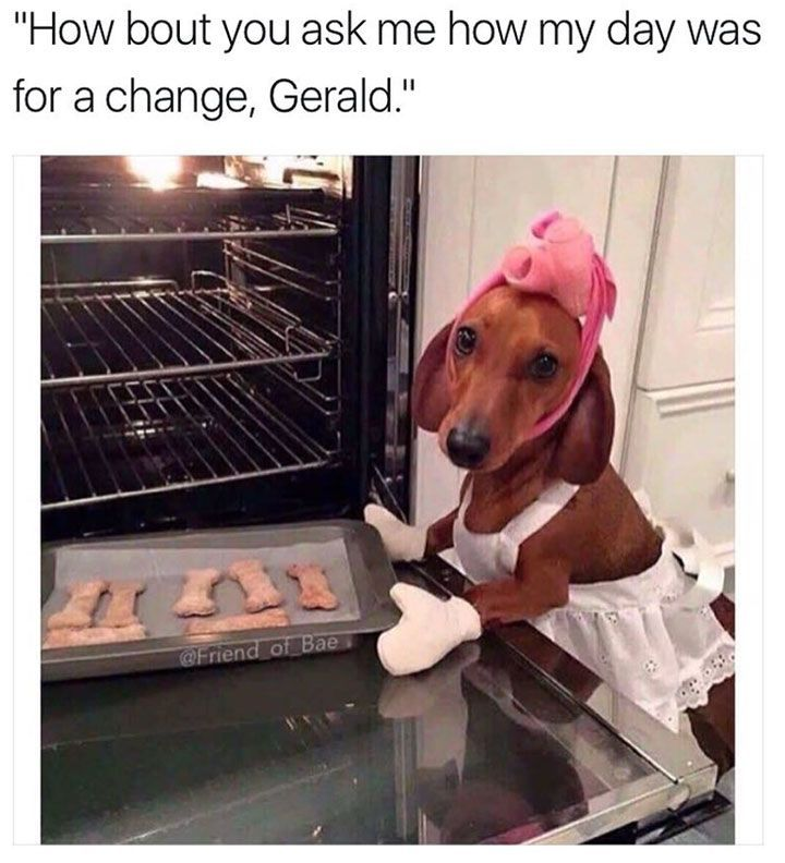 Funny Animal Pictures with Captions to Make You LOL – 29 #funnydogwithcaptions explo...
