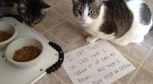 Community Post: Cat-Shaming At Its Best