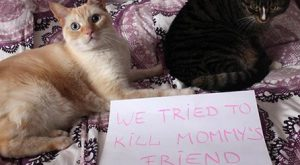 Funny pictures of public cat shaming featuring photos of felines and accompanying captions...