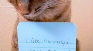 These Cats Are Funny Because They Aren't Mine – 20 Pics
