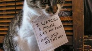Funny Cats   dumpaday funny pictures
