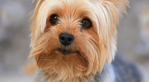 Keep your vacuum in the closet and adopt one of these low-maintenance pups. #bestdogbreeds...