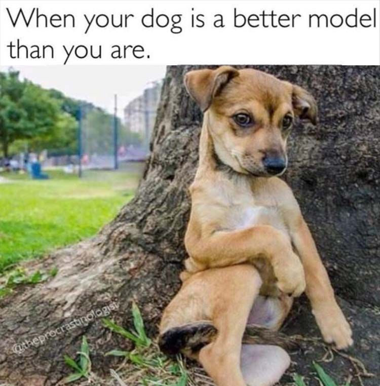 "Funny Animal Picture Dump Of The Day 24 Pics #funnydoghumor explore Pinterest""> #..."