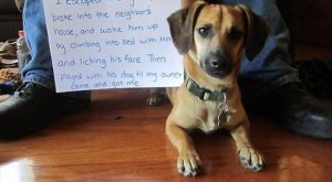 Dogs with Notes: The best of Dog Shaming (50 Funny Pictures) #funnydogshaming explore Pint...