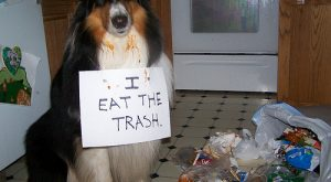 "Lesson #1 explore Pinterest""> #1- Shaming your dog #funnydogshaming explore Pinte..."