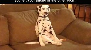 "Afternoon Funny Picture Dump 38 Pics #funnydogquotes explore Pinterest""> #funnydo..."