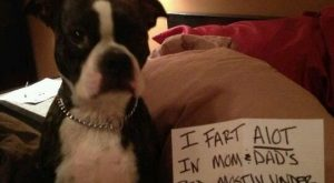 "#funnydogshaming explore Pinterest""> #funnydogshaming"