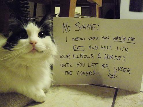 Cat Shaming from Pet Shaming .net – The New Dog Shaming