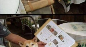 "40 Funny Dog Pictures With Captions #funnydogpictures explore Pinterest""> #funnyd..."