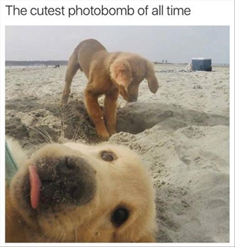 """Funny Animal Pictures Of The Day – 23 Pics #funnydoghumor explore Pinterest""""> #..."""