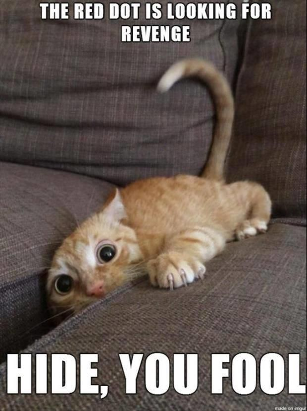 """The Red dot is out to get #funnydogwithcaptions explore Pinterest""""> #funnydogwith..."""