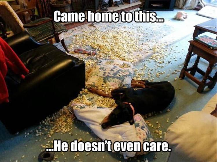 """Funny Animal Pictures Of The Day – 24 Pics #funnydogvideos explore Pinterest""""> ..."""