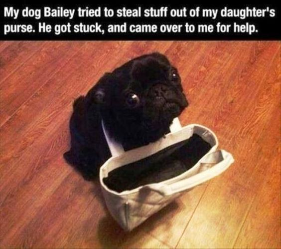 "Dog Shaming #dogshaming explore Pinterest""> #dogshaming"