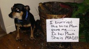 nice Hall Of Shame – Animal Version (28+ Pictures) #funnydogpictures explore Pintere...