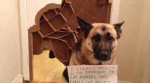 So that's what the inside of a door looks like! The Best of Dog…