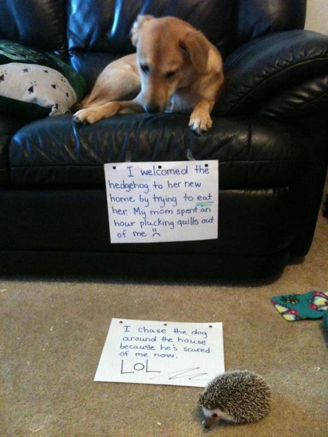 30 Naughty Dogs That Got Publicly Shamed – Dog Shaming #dogshaming explore Pinterest...