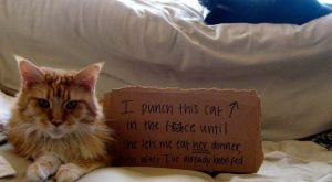 "Cats and their crimes – #funnydogshaming explore Pinterest""> #funnydogshami..."