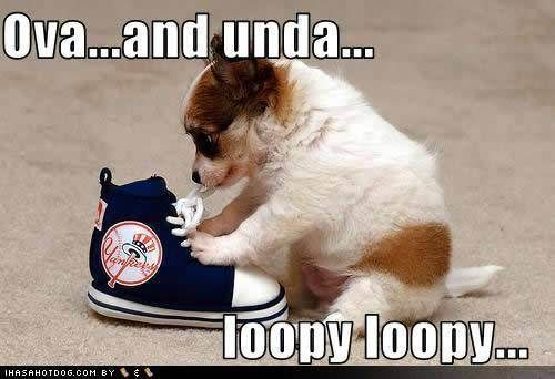 funny animal pictures with captions | Cute Animals With Captions : theBERRY #funnydogwithc...