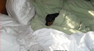 Funny Dachshund Pictures with Captions | … dachshund – Page 41 – Loldogs...