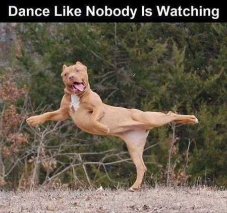 """36 Absolutely Adorable And Funny Animals #funnydoglaughter explore Pinterest""""> #f..."""