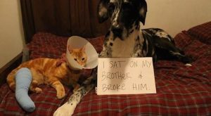 Guilty animals that are working their way into the Hall of Shame (27 Photos)